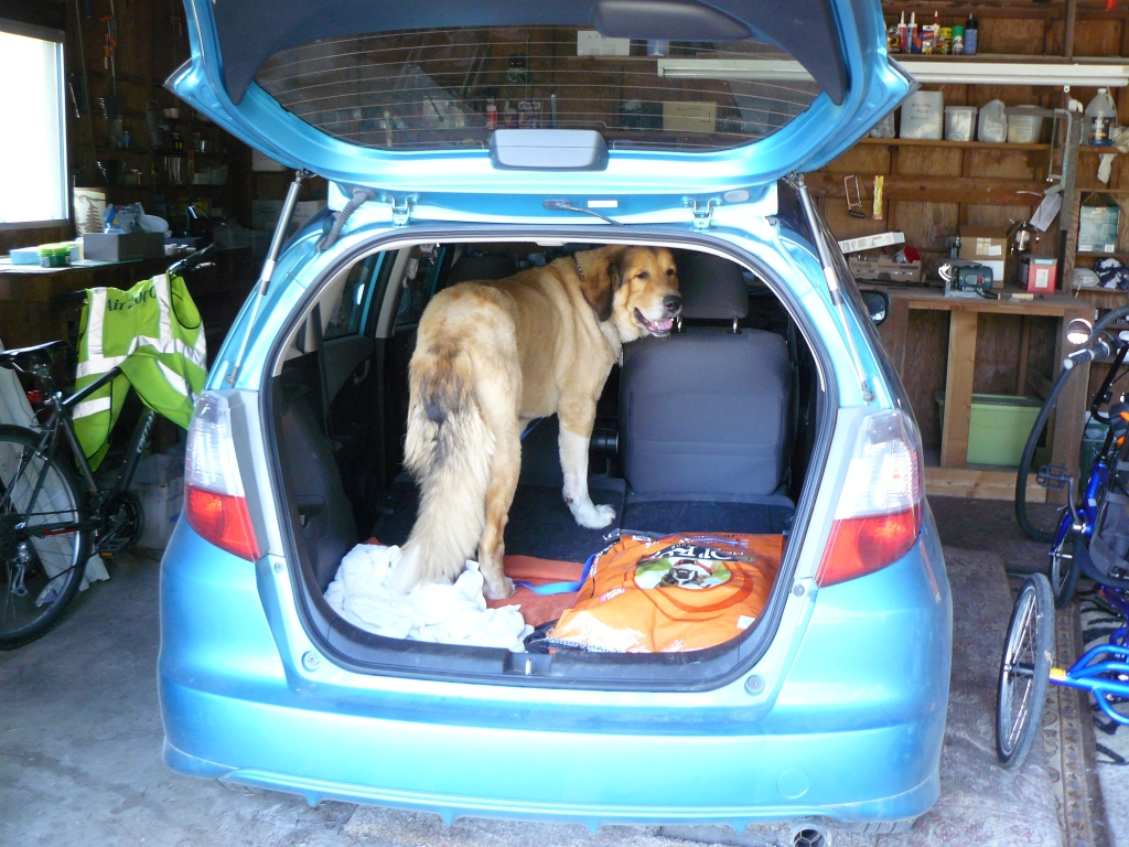 Brandy's first look at his new home from the back of the car in the garage.