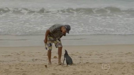 The prodigal penguin returns (Picture: TV Globo)