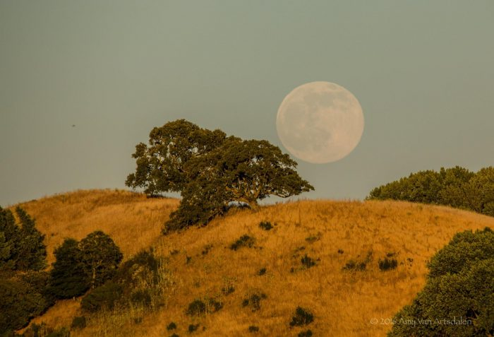 Rising nearly full moon – near San Francisco, California – on June 19, 2016 via EarthSky Facebook friend Amy Van Artsdalen.
