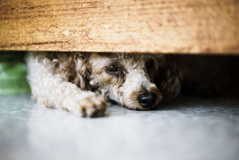 If your dog finds comfort in hiding, you may just want to leave her alone. (Photo: NARUCHA KLINUDOM/Shutterstock)