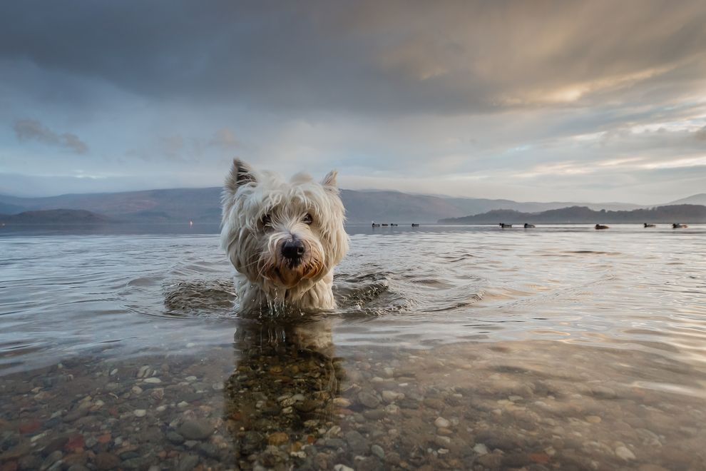Winner of the Dogs at Play category (Photo: Tom Lowe/Dog Photographer of the Year Competition)