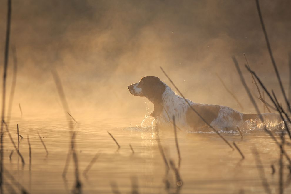 Winner of the Dogs At Work category as well as overall winner of the competition (Photo: Anastasia Vetkovskaya/Dog Photographer of the Year Competition)