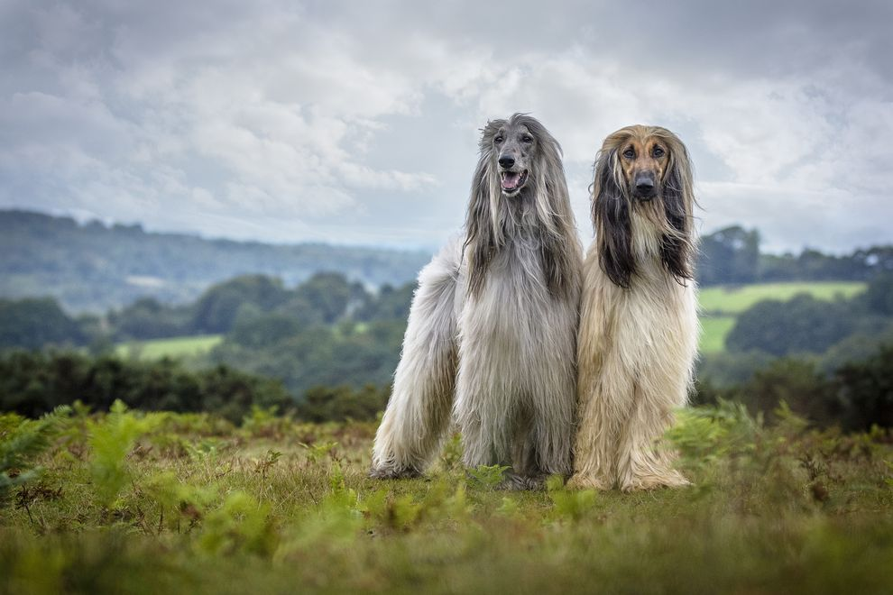Winner of the Dog Portrait category (Photo: Jamie Morgan/Dog Photographer of the Year Competition)