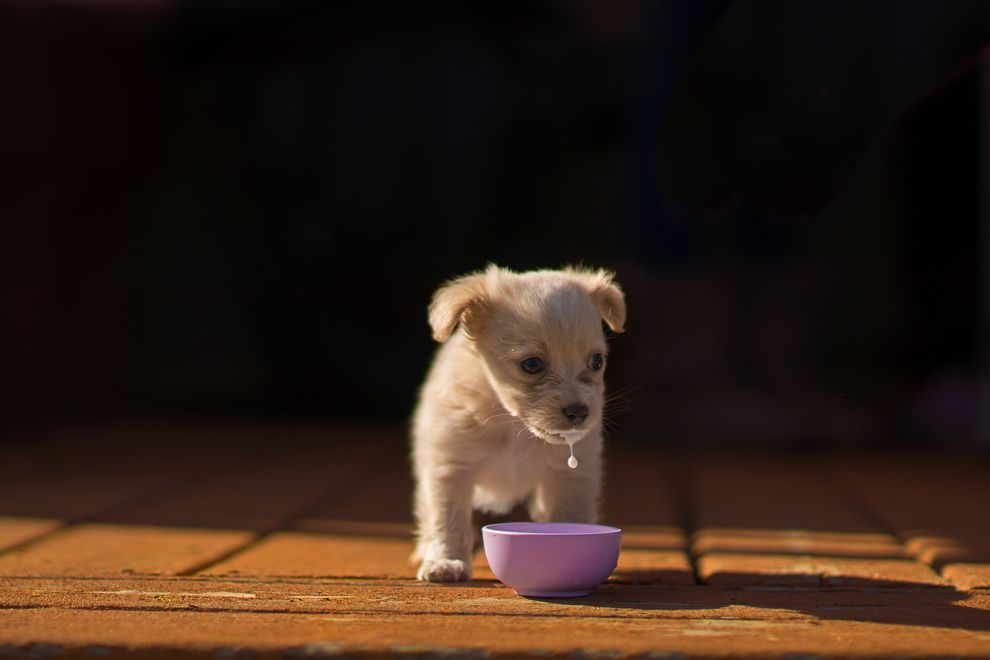 Winner of the Puppy category (Photo: Linda Storm/Dog Photographer of the Year Competition)