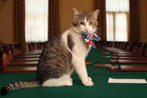 Larry, Chief Mouser to the Cabinet Office (Her Majesty's Government)