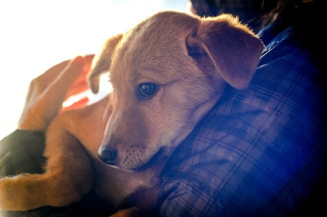 Some dog behaviorists believe you reward fearful behavior by trying to comfort a scared pup.