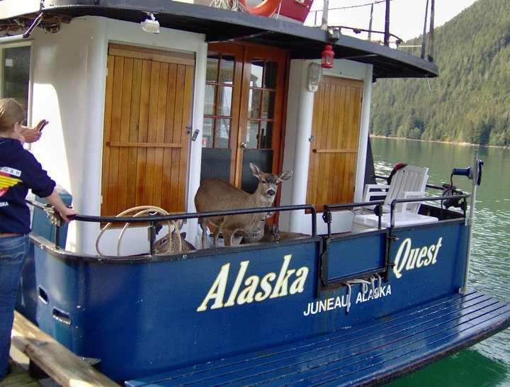 deer on boat08