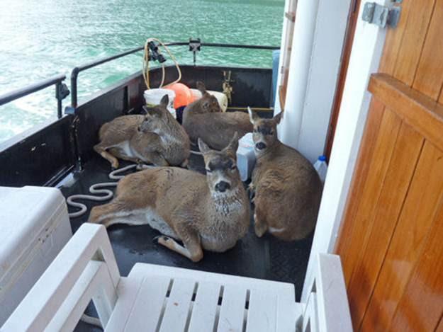 deer112