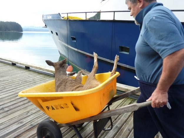 deer115