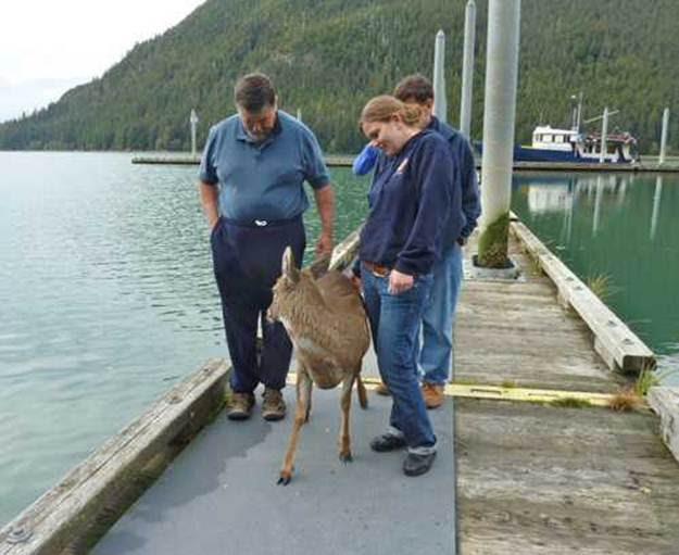 deer116