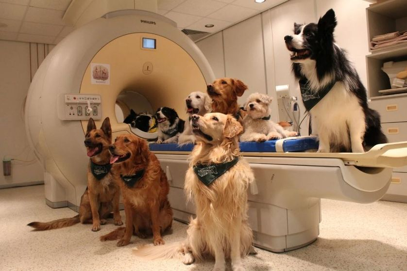 Dogs in Hungary sit around the MRI scanner used to measure their brain activity. (Photo: Enikő Kubinyi)
