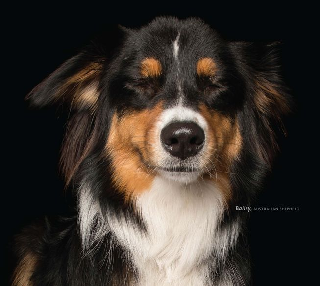 Bailey is an Australian shepherd. (Photo: 'Zen Dogs' by Alex Cearns/HarperOne)