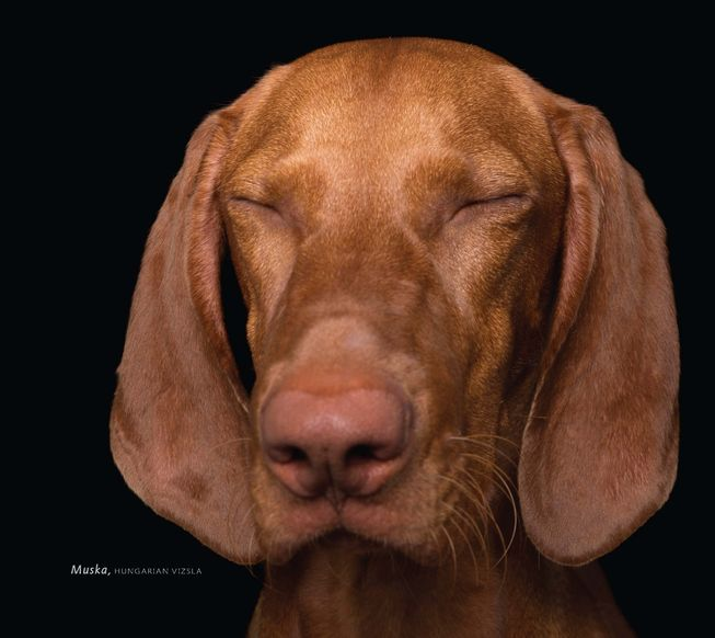 Muska is a relaxed Hungarian vizsla. (Photo: 'Zen Dogs' by Alex Cearns/HarperOne)