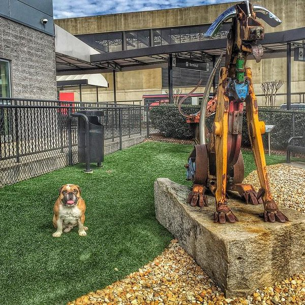 If you are a #dog and you like to travel the Atlanta airport has an amazing dog park!
