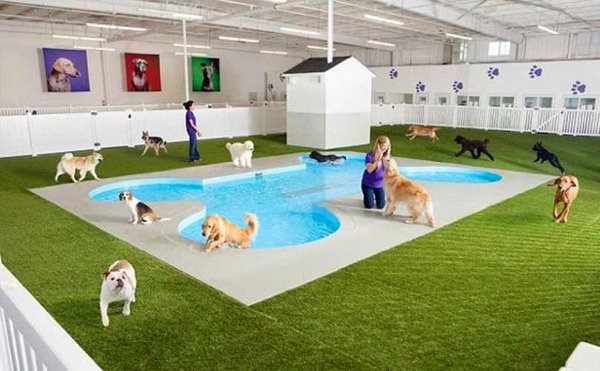 World's First Luxury Dog Resort Terminal To Be Opened At JFK Airport