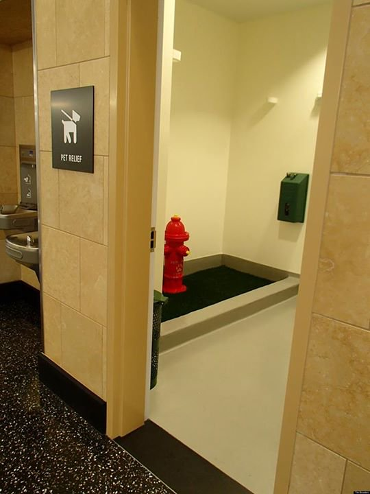 San Diego Airport now has a dog bathroom