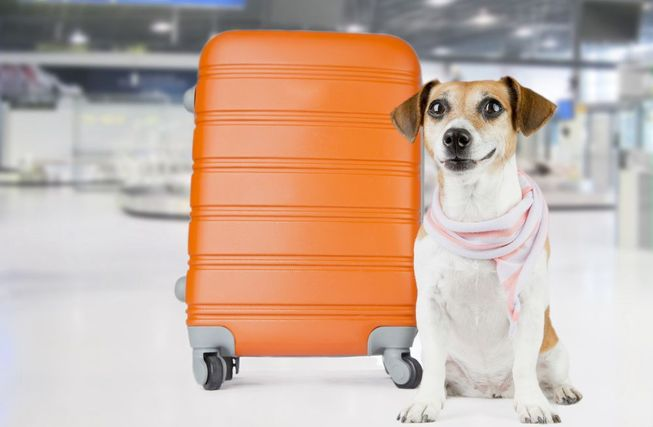 Traveling with your pet can be stressful and tricky, but some airports make the process easier than others. (Photo: Fly_dragonfly/Shutterstock)