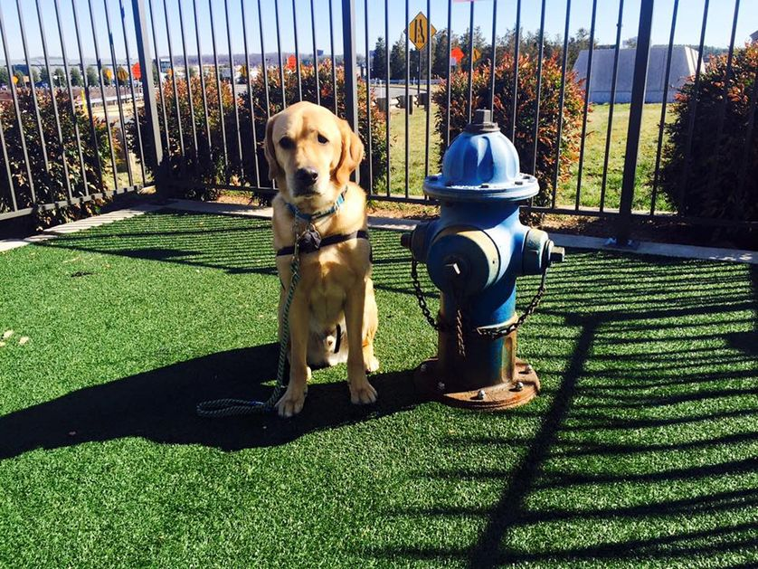 Washington Dulles International Airport has five indoor and outdoor pet-friendly areas. (Photo: Cassius - Canine Companions for Independence Service Dog/Facebook)