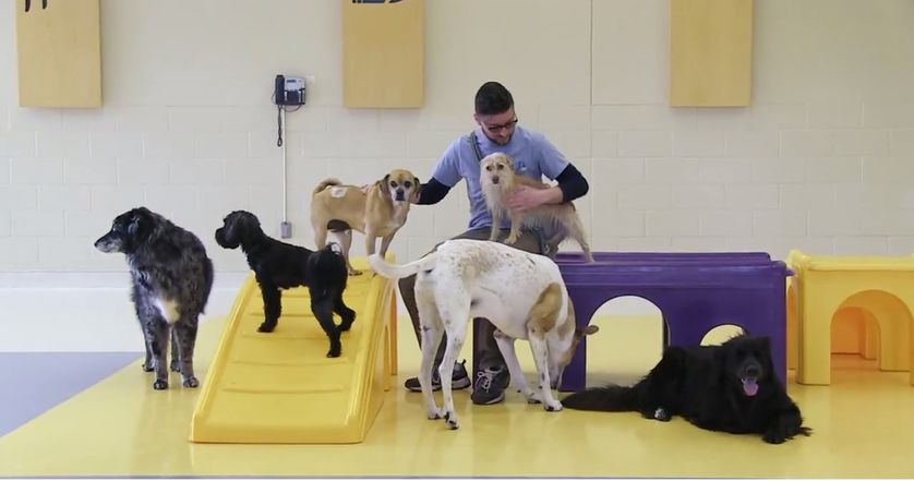 MSP's Now Boarding offers pet boarding services to travelers flying out of the airport. (Photo: Now Boarding/YouTube)
