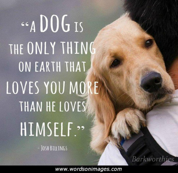 1070310989-222362-puppy_love_quotes___
