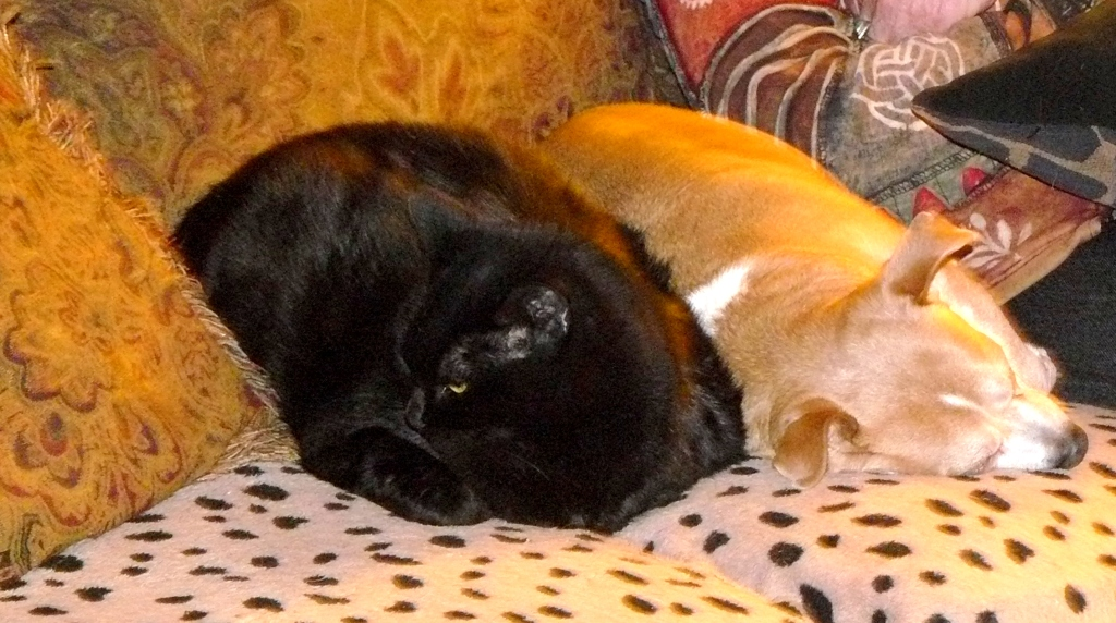 Araña, one of our three cats, sleeping next to Pedy. (Araña is the Spanish word for spider.)