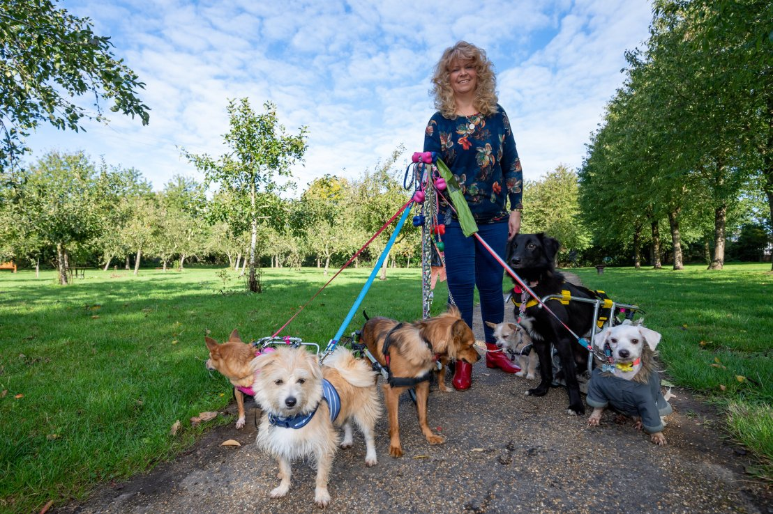 Claire walking with 8 out of the 27 dogs that she has helped to walk again. (©SWNS)